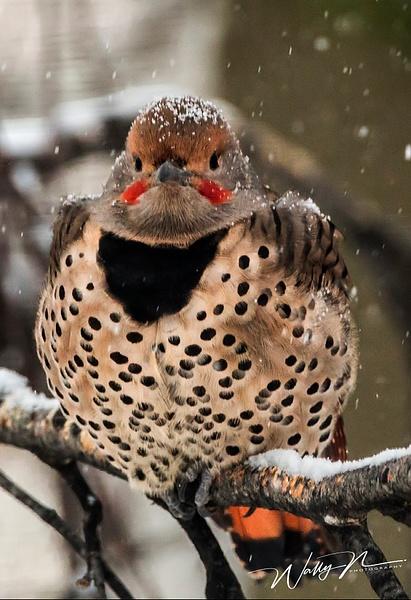 Flicker__73A9194 - Birds - Walter Nussbaumer Photography