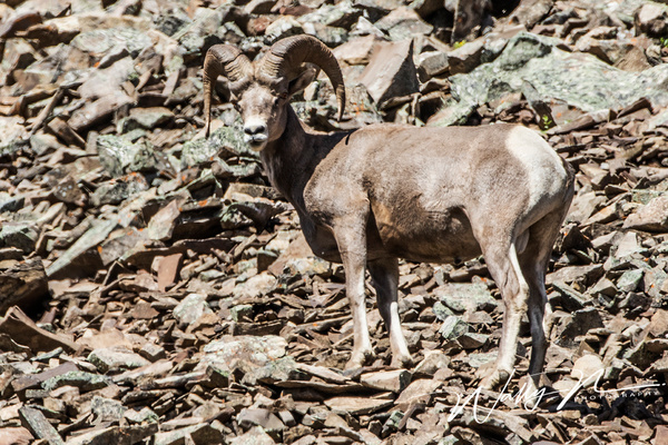 RMBH_0R8A0007 - Miscellaneous Wildlife - Walter Nussbaumer Photography