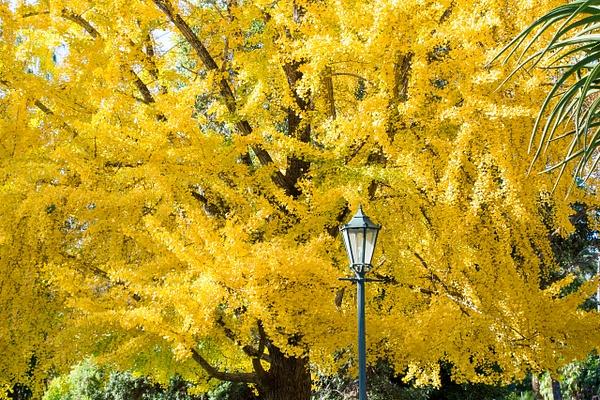 Albury Botanical Gardens - Home - Graeme Welsh Photography
