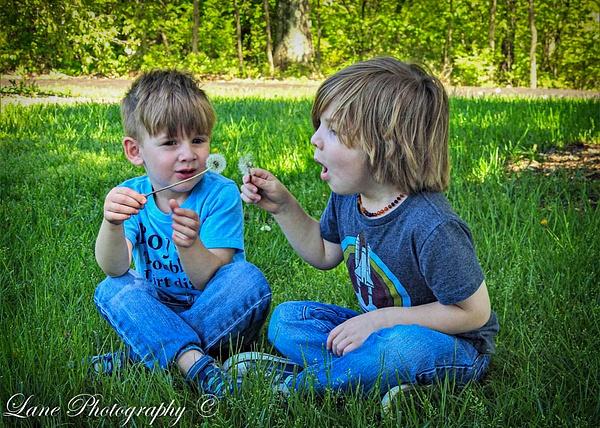 Andrew Sawyer Arboretum dandelion (1 of 1) - Children - Lane Photography