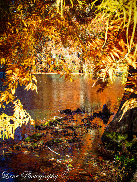 Sharon Woods Peeking Through Trees (1 of 1) - Nature - Lane Photography