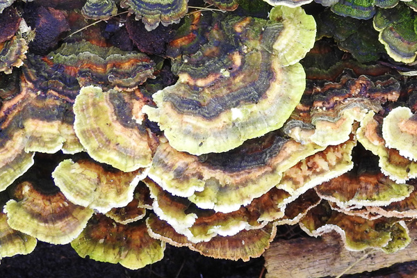SW 2-5-19 (116) - Copy - Fungus - Lane Photography