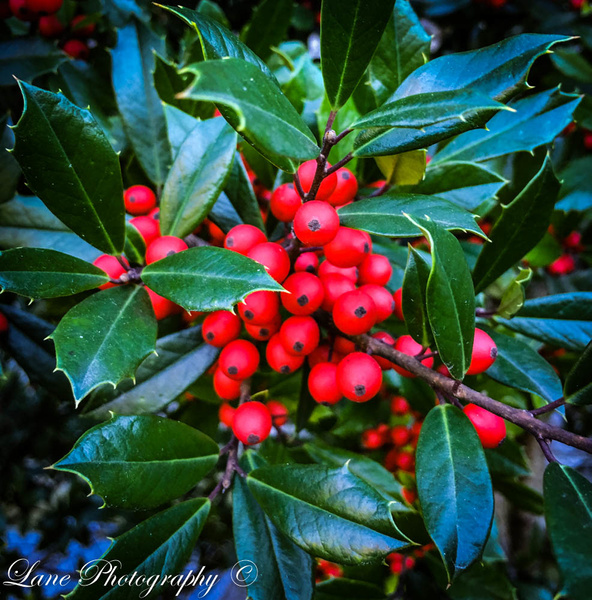 Holly Spring Grove Cemetery - Nature - Lane Photography