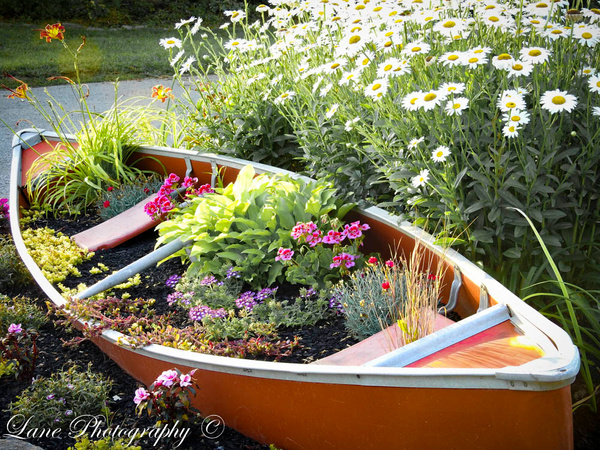 Aurora IN Canoe Flowerbed III (1 of 1) - Copy - Nature - Lane Photography