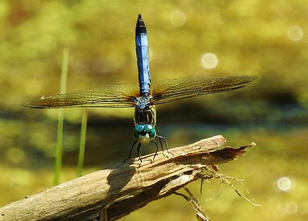 Idlewild 5-25-18 (65) - Nature - Lane Photography