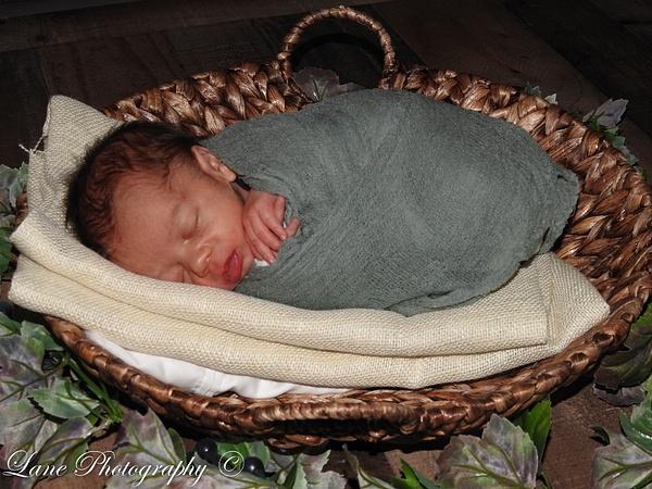 Nikki Newborn 9-9-20 8088-0888 - Newborn - Lane Photography