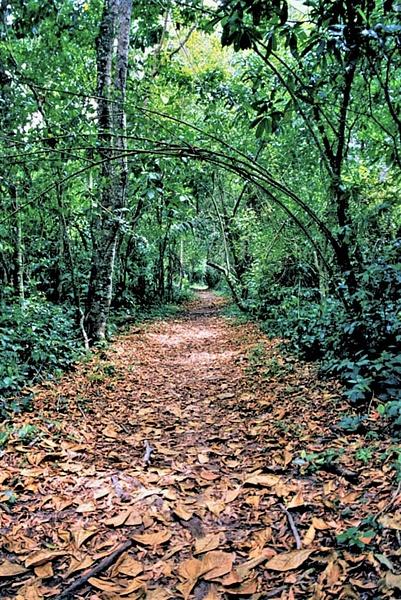 Rain Forest Costa Rica - Caribbean - Image8