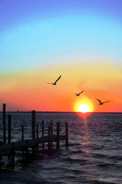 Sunset and seaguls - Caribbean - Image8