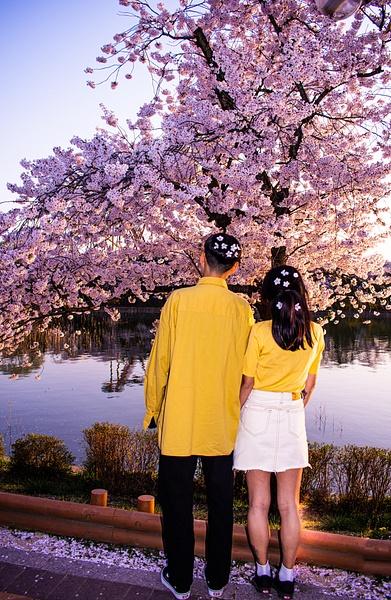 Spring Cherry Blossom Couple - Travel - Nicola Lubbock Photography