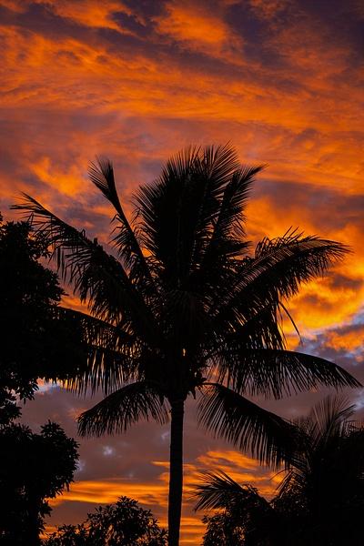 Sunset Palms - Travel - Nicola Lubbock Photography