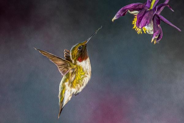 Art - Allan Barnett Photography
