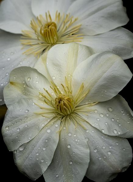 Flowers by Allan Barnett