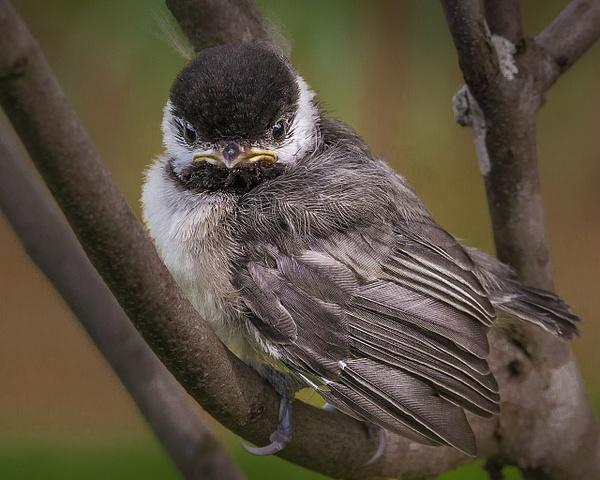 Birds by Allan Barnett