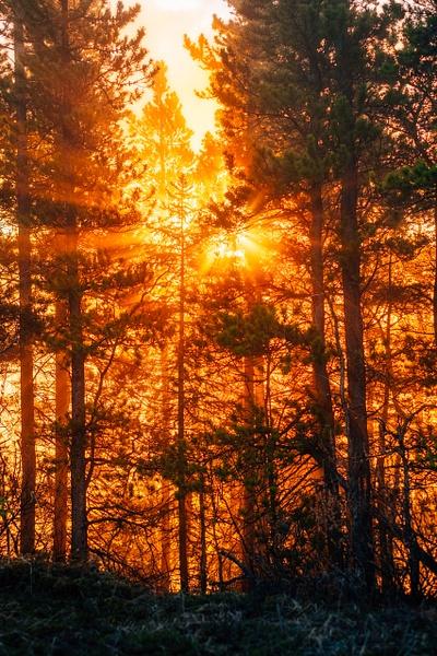 Sunlight glowing through trees-Kananaskis, Alberta,...