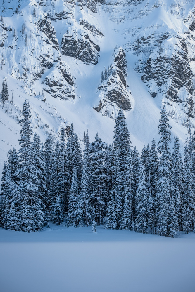 Pine Trees Covered of Snow-Based of Mount Rawson, Kananaskis, Alberta, Canada
