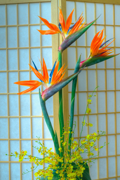 Bird of Paradise (FG0006) - Floral - Bella Mondo Images