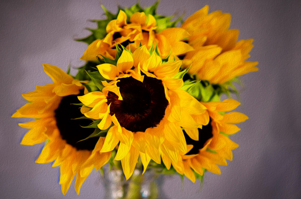Sunflower (FG0041) - Floral - Bella Mondo Images