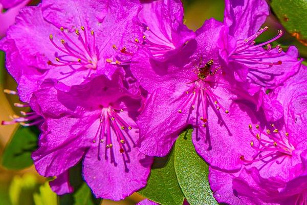 FG0057 - Floral - Bella Mondo Images