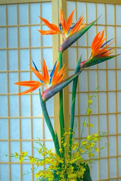 Bird of Paradise (FG0006) - Home - Bella Mondo Images