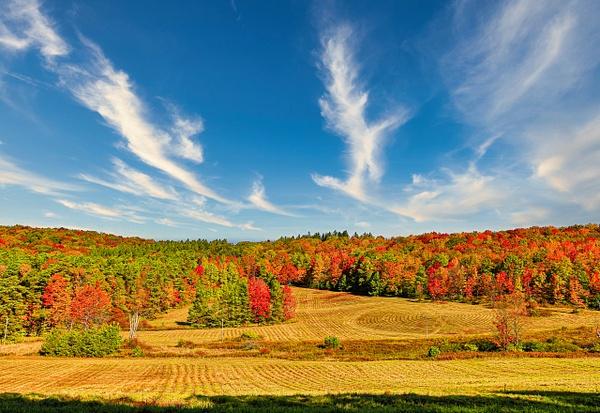 2020 Fall Foliage (US1706) - Landscape - Bella Mondo Images