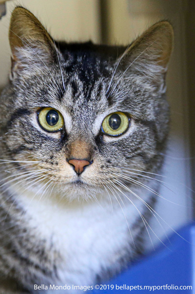 cat_2 copy - Professional Services - Bella Mondo Images