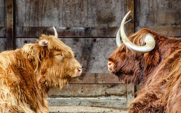 Mr & Mrs - Plumpton Park Zoo - Robert Moore Photography