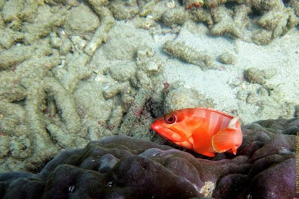 Thailand 2011 by ctpe71ok by ctpe71ok