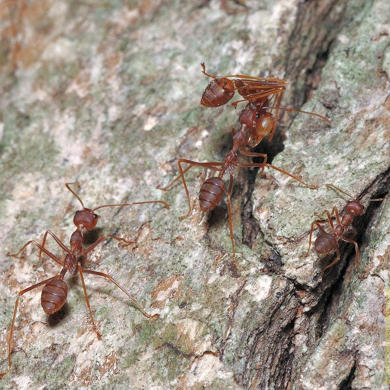 ants6-1530544454-O