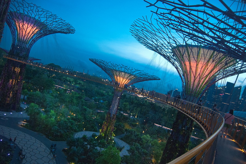 supertrees_0024_res