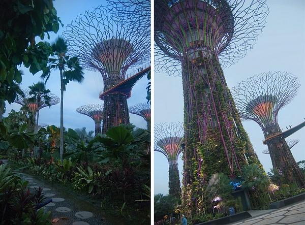 Singapore Supertrees by MariaMurashova by MariaMurashova