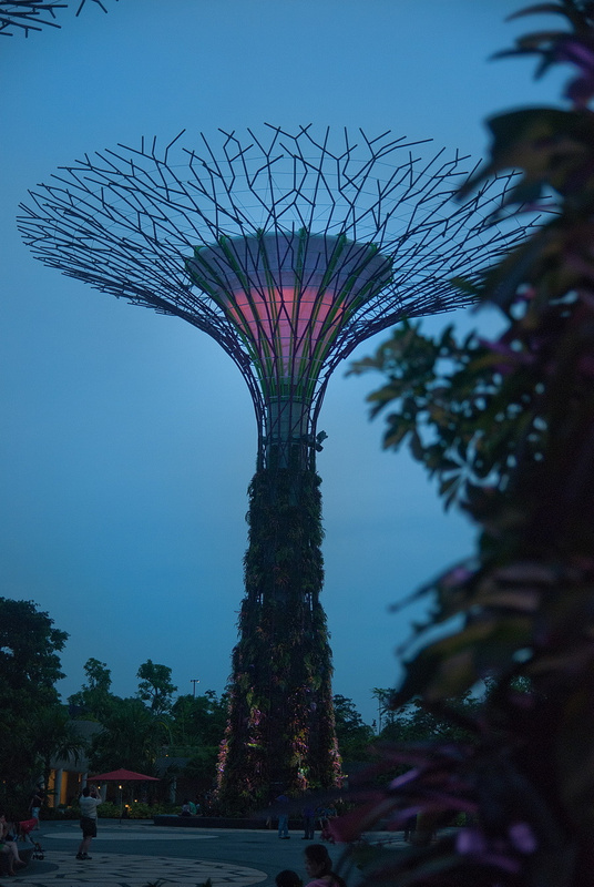 supertrees_0010_res