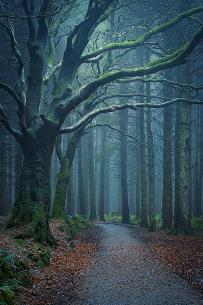 Beecraigs Country Park - Woodland Photography