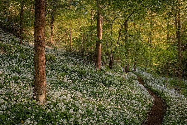 Kinneil Estate - Woodland Photography