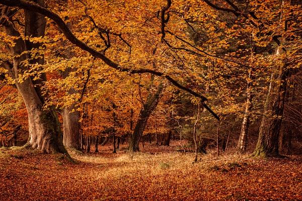 Mine Woods - Woodland Photography