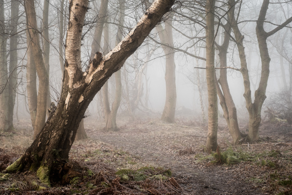 Woodend - Woodland Photography