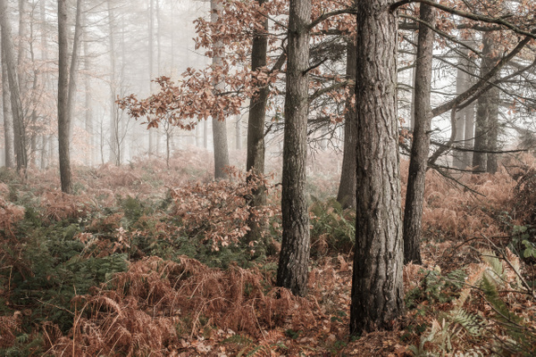 Forestmill - Woodland Photography
