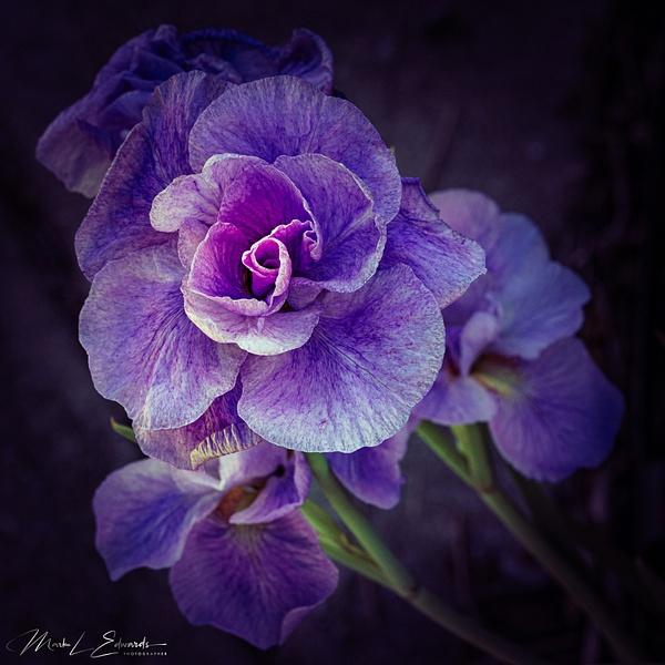 210605_Beauty_2832 - Tranquil Landscapes - Mark Edwards Photography
