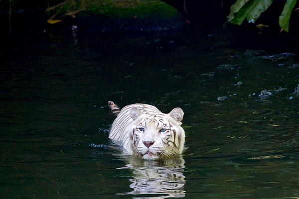 singapore zoo 47