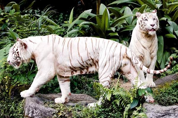 singapore zoo 98