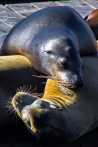 IMG_0566 - Nature & Wildlife - Michael Reining Images