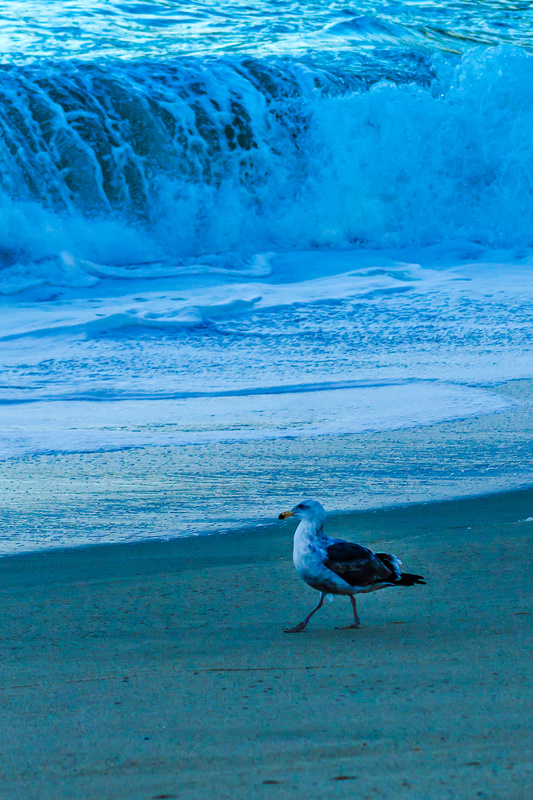 Seagull and suds.