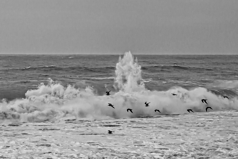 Wave blast and Pelicans. Winter on the California coast.