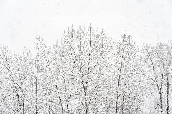_EME9701 - Snow and Ice - ErikEilers