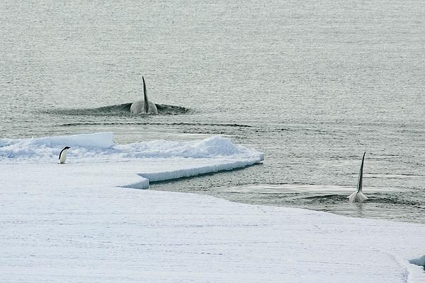 antarctica_12-25-2004_1865 - Snow and Ice - ErikEilers