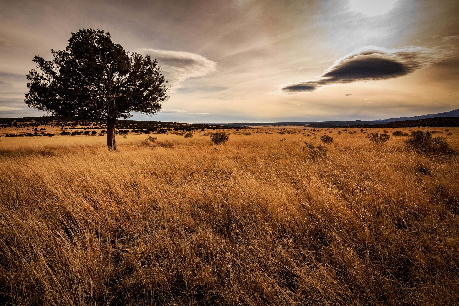 SaddleRockPhotography's Gallery