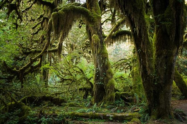 Nature-107 - Landscape -  Marcs Photo