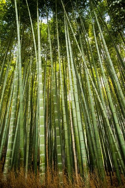 Nature-179 - Landscape -  Marcs Photo