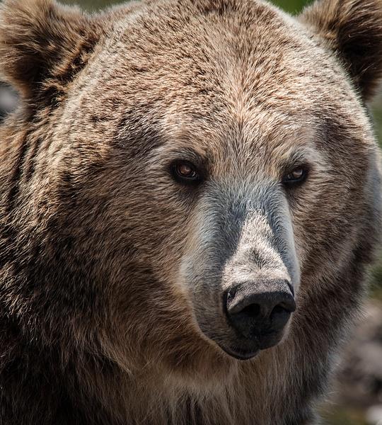 Animaux-11 - Wildlife - Marcs Photo
