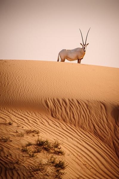 Animaux-32 - Wildlife - Marcs Photo