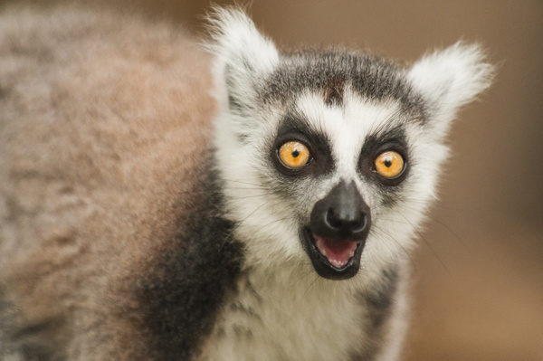 Animaux-21 - Wildlife - Marcs Photo